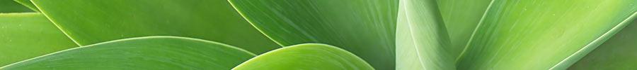 agave header 900x100